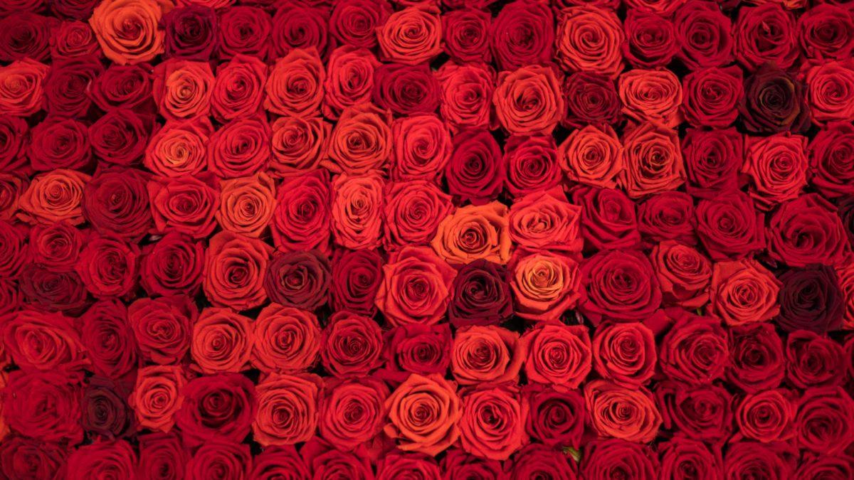 Wieczne róże – co to takiego i skąd ich nazwa?