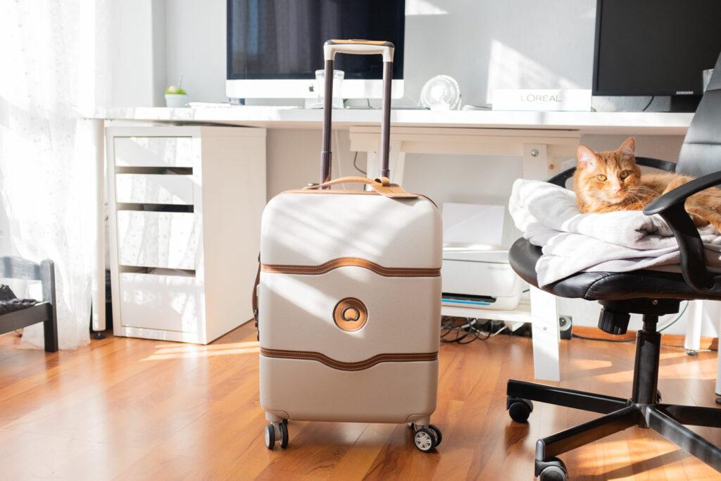 bagaż walizka delsey chatlet air w mieszkaniu obok rudego kota bagaż
